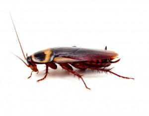 Pest Control 365
