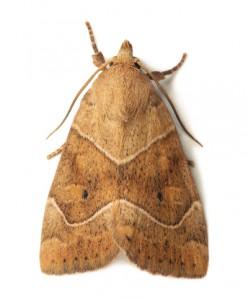 moth-pic